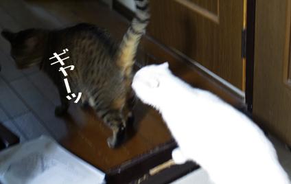 ぢいふぃfdfdfコピー