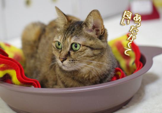 交換後の猫鍋は大人気の巻