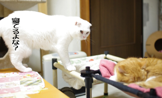 揃わない猫達&猫ぐらし「決定的瞬間フォトコン」