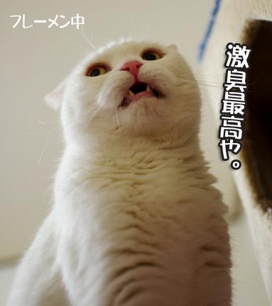 ippaigekisyuiasのコピー