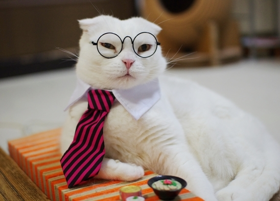 メガネをかけた猫とお仕置き動画