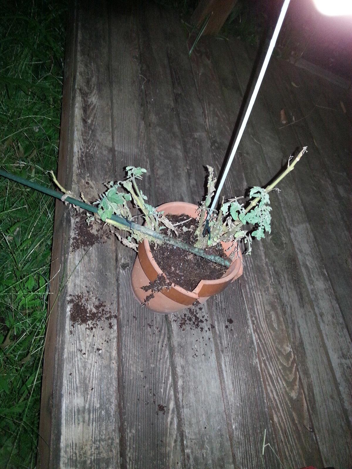 植木鉢破損