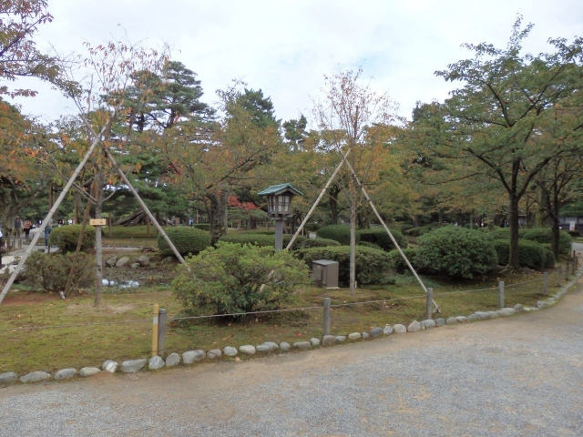 fuyuzakura_PA141387.jpg