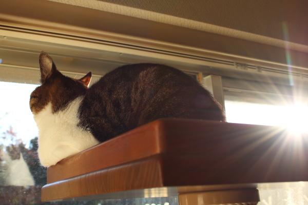 猫はガラスに映る