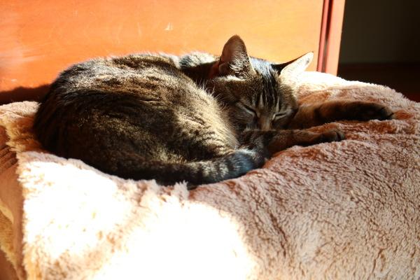 猫は疲れ、人も疲れる