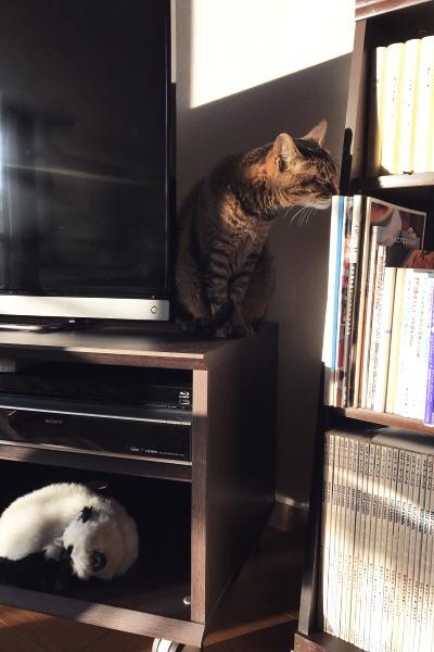 猫は人を化かすか