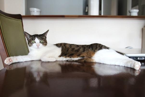 猫は〇〇を蓄える