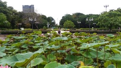 P_20170924_105139lotus pond