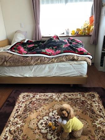 bed10.jpg