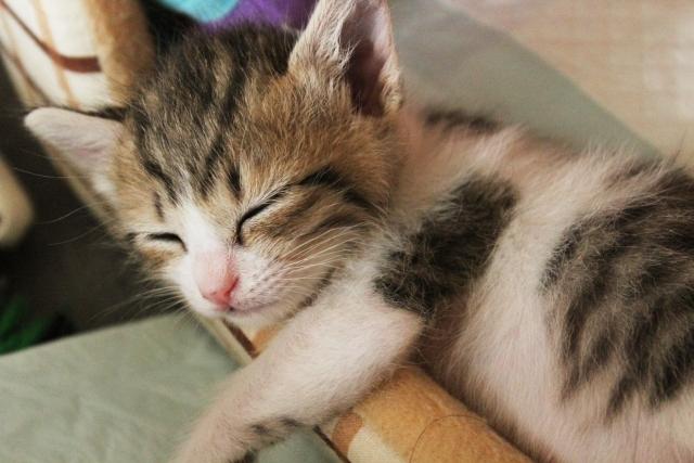 寝る子は育つ 猫 ネコ