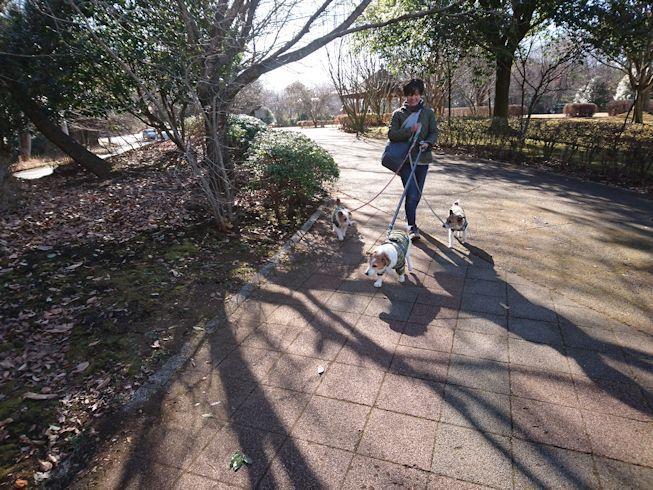 2017長岡公園672