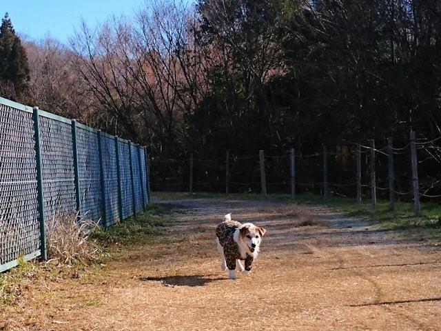 2018長岡公園003
