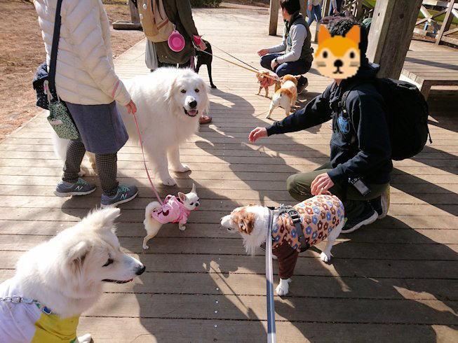 2018長岡公園030