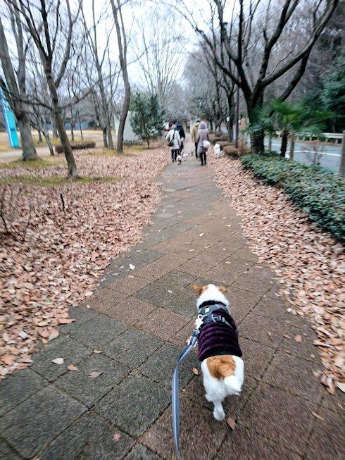 2018長岡公園042