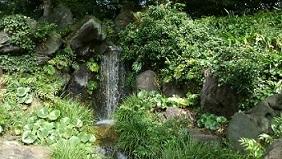 北の丸庭園3