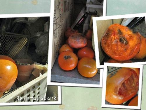 ネズさん柿を食べた (^ ^)