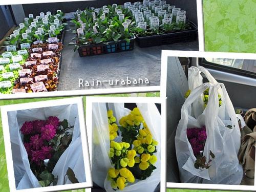 苗を積んで、お花屋さんでお花を買って...