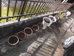 鉢の草取り20171201