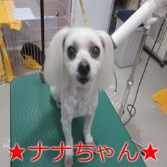 IMG_0015_20171213214220e87.jpg