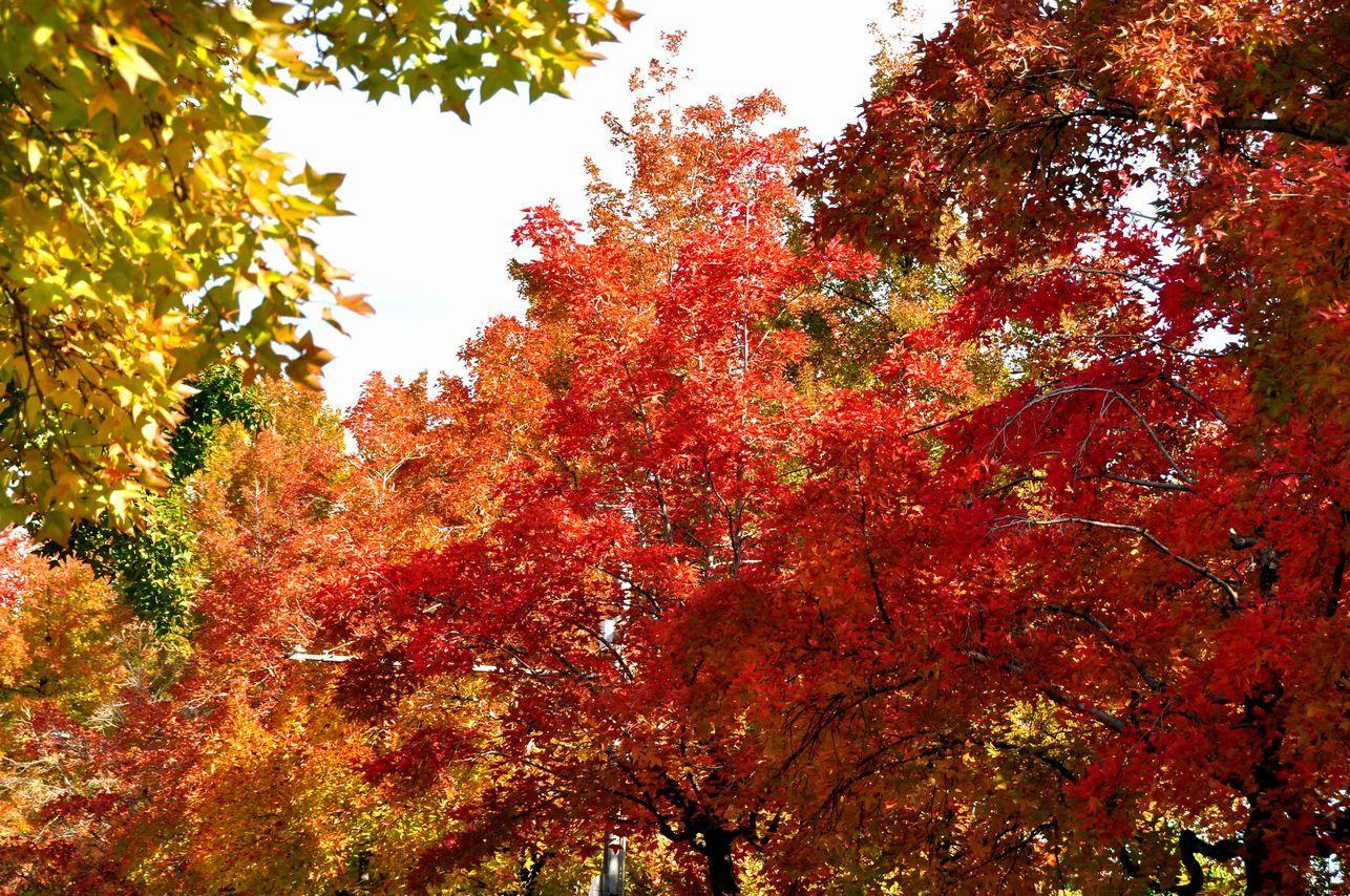 ②木々の色づき