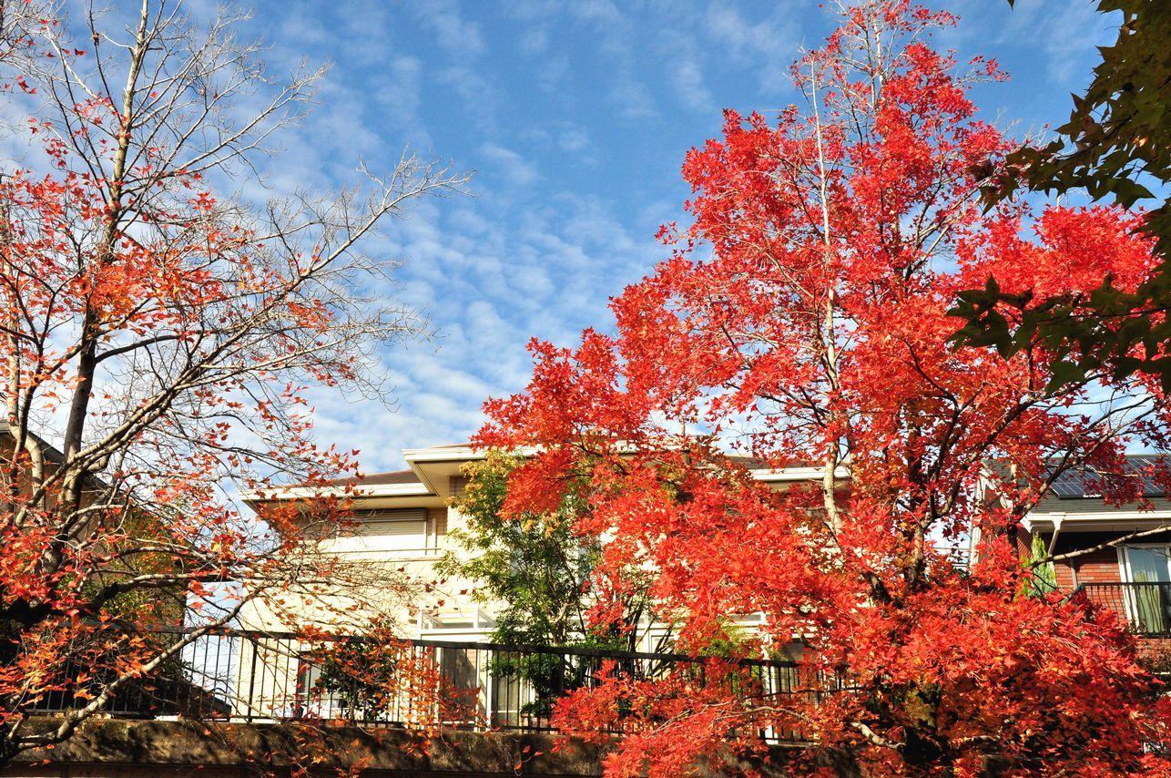 ④鱗雲と家と色づき