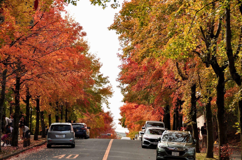 ⑧秋のいろどり