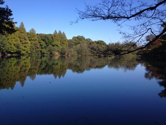 三宝寺池。
