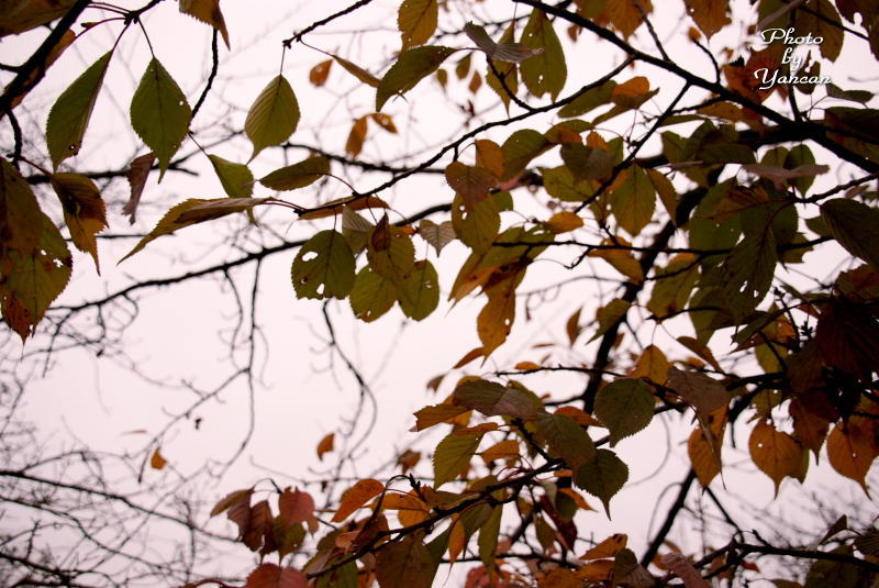 初冬の木々 前神寺 愛媛県西条市洲の内