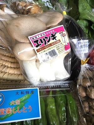 10月野菜セットアップ①