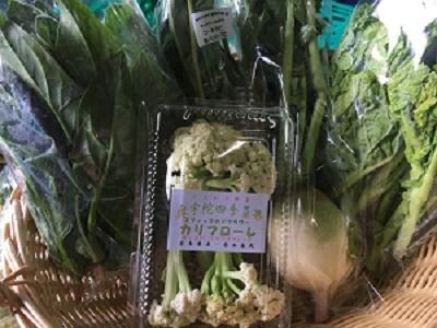 1月野菜セット①