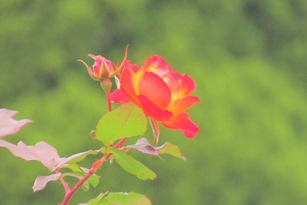 flowergarden171224-101.jpg