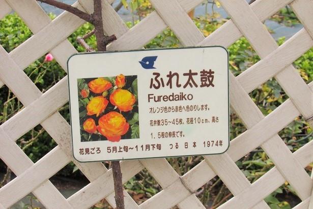 flowergarden171224-103.jpg