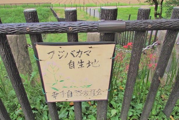 gongendou170924-110.jpg