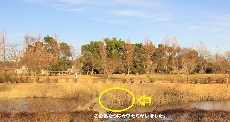 hananooka180107-108.jpg