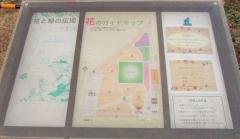 mitaka-flower171223-201.jpg