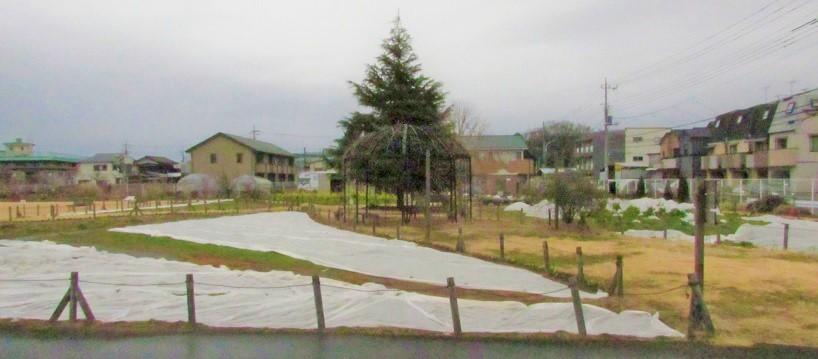 mitaka180108-104.jpg