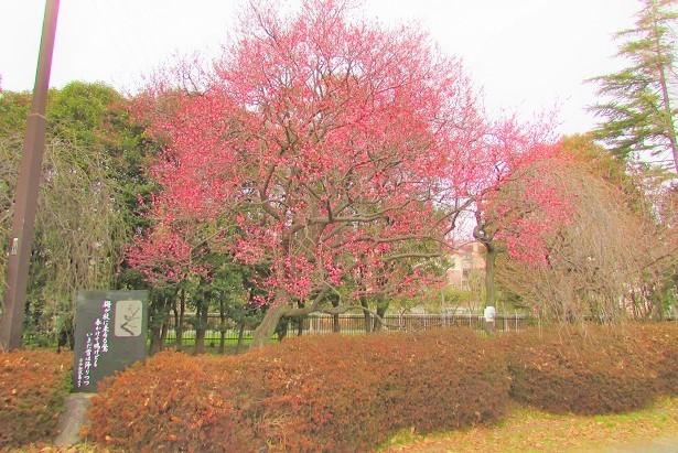 oomiya-daini180120-104.jpg
