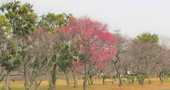 oomiya-daini180120-105.jpg