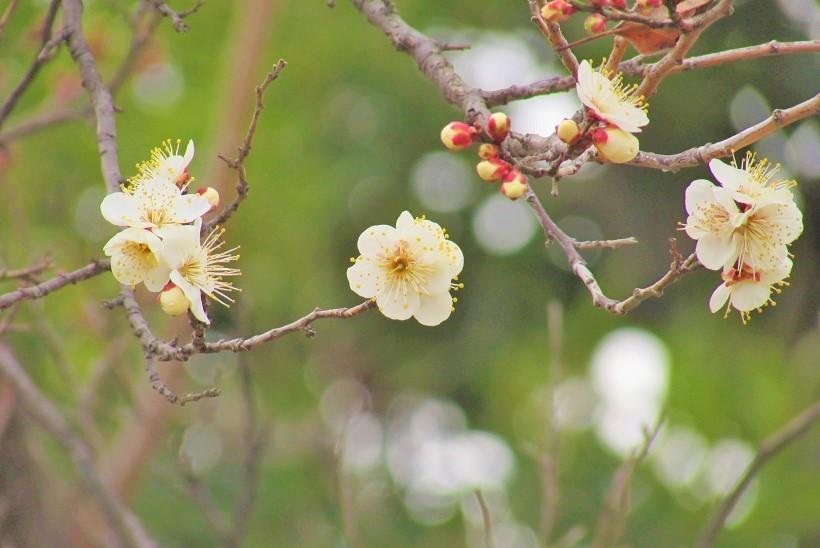 oomiya-daini180120-111.jpg