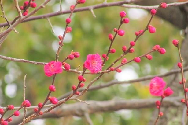 oomiya-daini180120-117.jpg