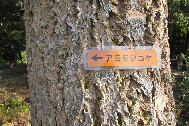 tukuba-shokubutu171103-107.jpg