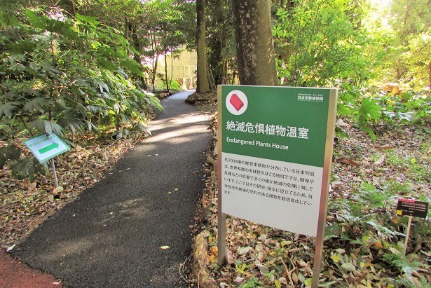 tukuba-shokubutu171103-110.jpg