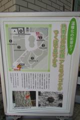 tukuba-shokubutu171103-201.jpg