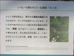 tukuba-shokubutu171103-202.jpg