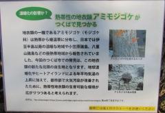 tukuba-shokubutu171103-203.jpg