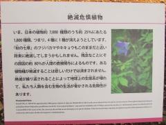 tukuba-shokubutu171103-205.jpg