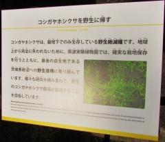 tukuba-shokubutu171103-206.jpg