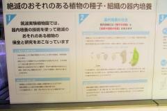 tukuba-shokubutu171103-208.jpg