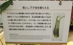 tukuba-shokubutu171103-211.jpg