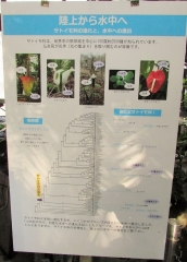 tukuba-shokubutu171103-212.jpg